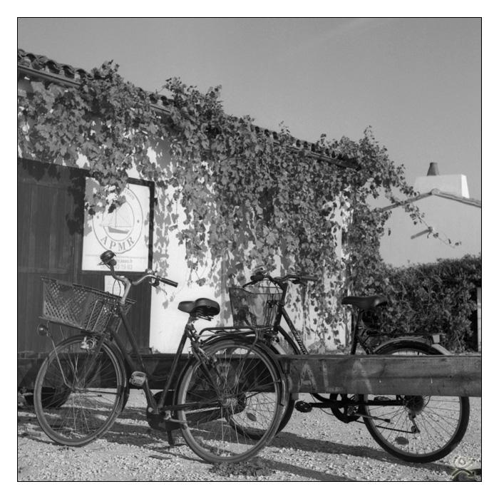 L´île aux vélos