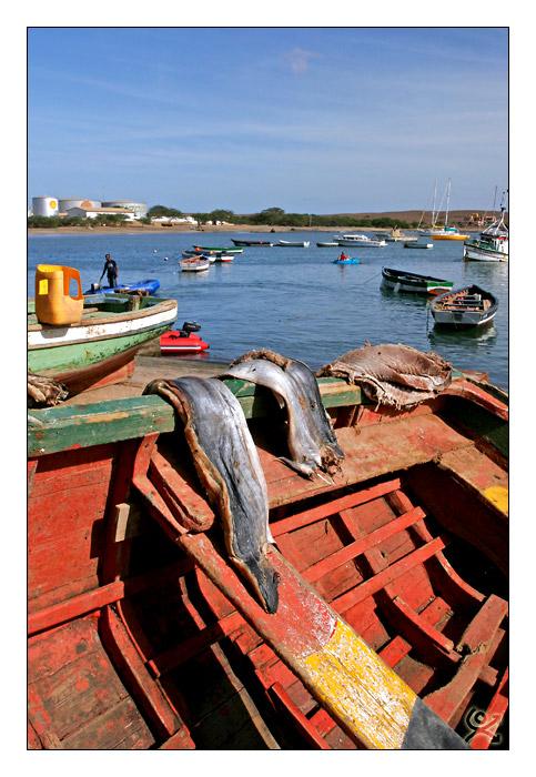 Conservation du poisson